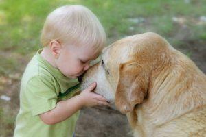 Il Labrador Retriver il compagno di giochi dei bambini