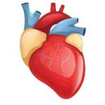 Cardiologia Nomentana - Centro Specializzato