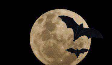 La notte dei pipistrelli a Roma