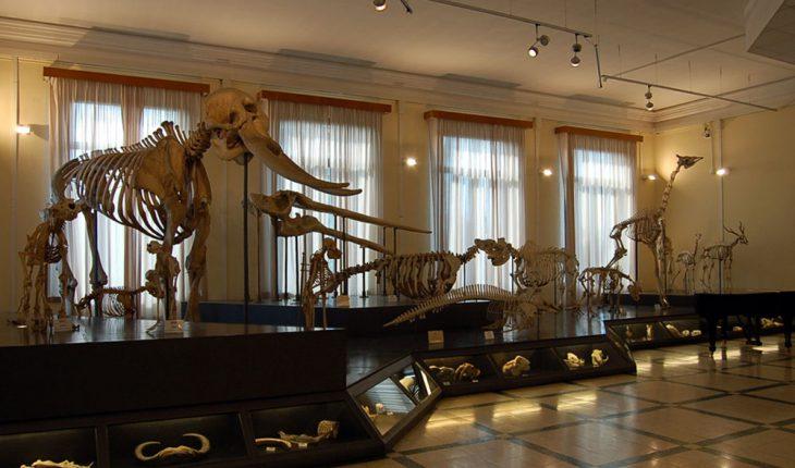 Jurassic Night Museo di Zoologia - Una notte da paura