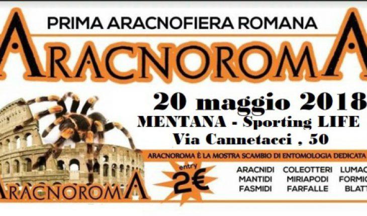 Aracnoroma