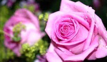 Festa delle Rose Grottaferrata