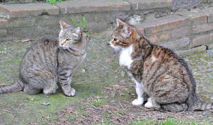 Gatti della Piramide Roma