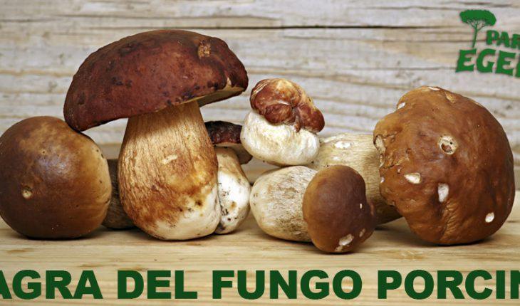 Sagra del fungo porcino Parco Egeria